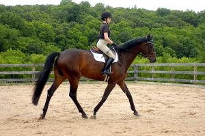 horse-riding-in-qatar